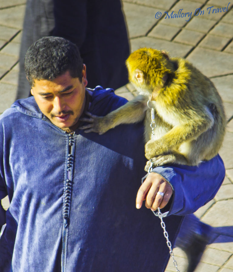 Monkey wrangler at Djemaa el Fna, Marrakech on Mallory on Travel, adventure, photography