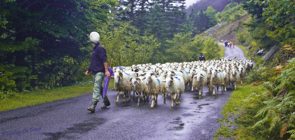 Transhumance in Val d'Azun near the village of Arrens-Marsous in the French Pyrenees on Mallory on Travel, adventure, adventure travel, photography