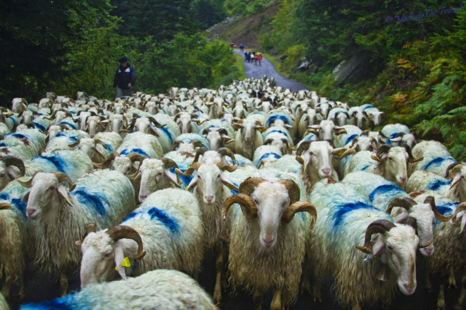Agritourism in the French Pyrenean Val d'Azun on Mallory on Travel, adventure, adventure travel, photography