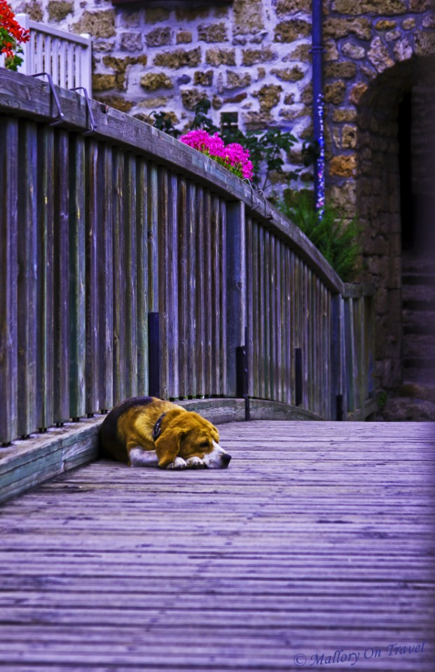 Rest canine in Ste Eulalie de Cernon in the Aveyron region of France on Mallory on Travel, adventure, adventure travel, photography