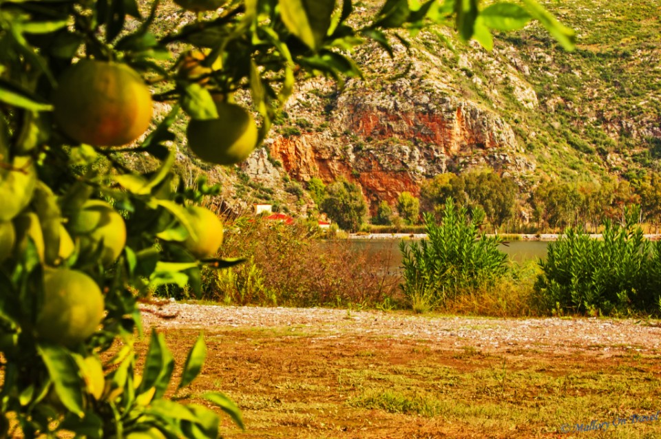 The fruit trees of Kaiafas Lake, Ilia near Olympia, Greece on Mallory on Travel, adventure, adventure travel, photography