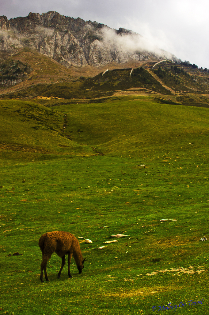 Wanderlusting; Llamas grazing near a village in the French Pyrenees at the foot of the Pic du Midi on Mallory on Travel, adventure, adventure travel, photography