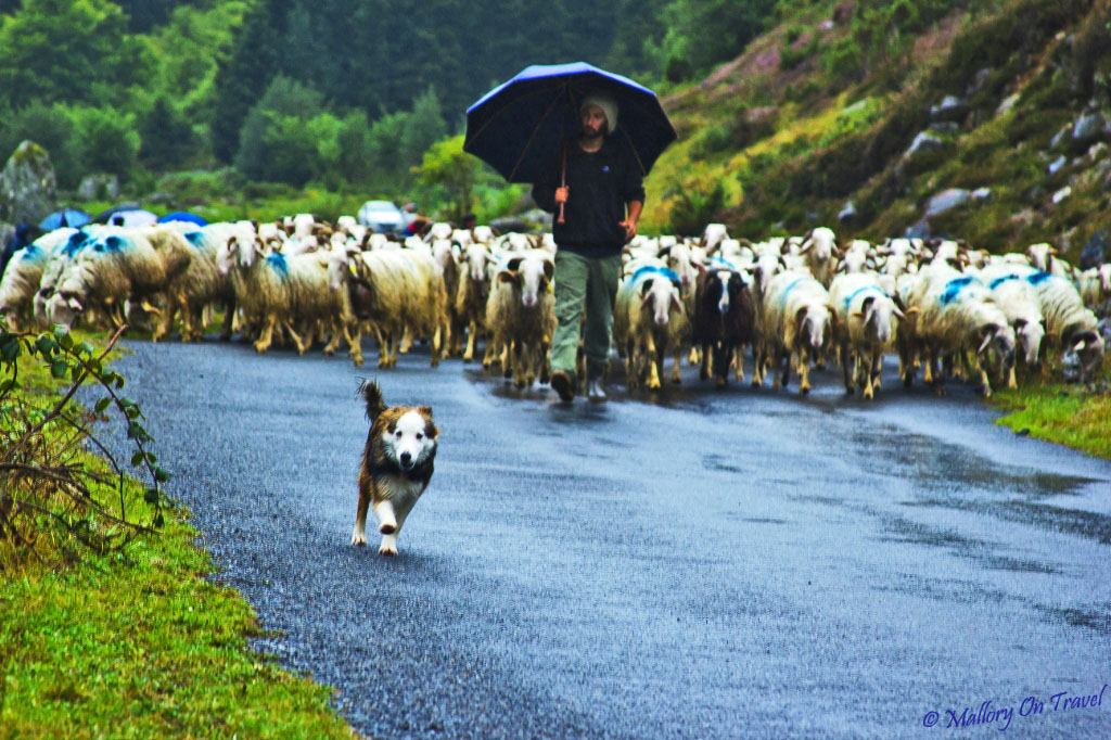 Transhumance and agritourism in Val d'Azun near the village of Arrens-Marsous in the French Pyrenees on Mallory on Travel, adventure, adventure travel, photography