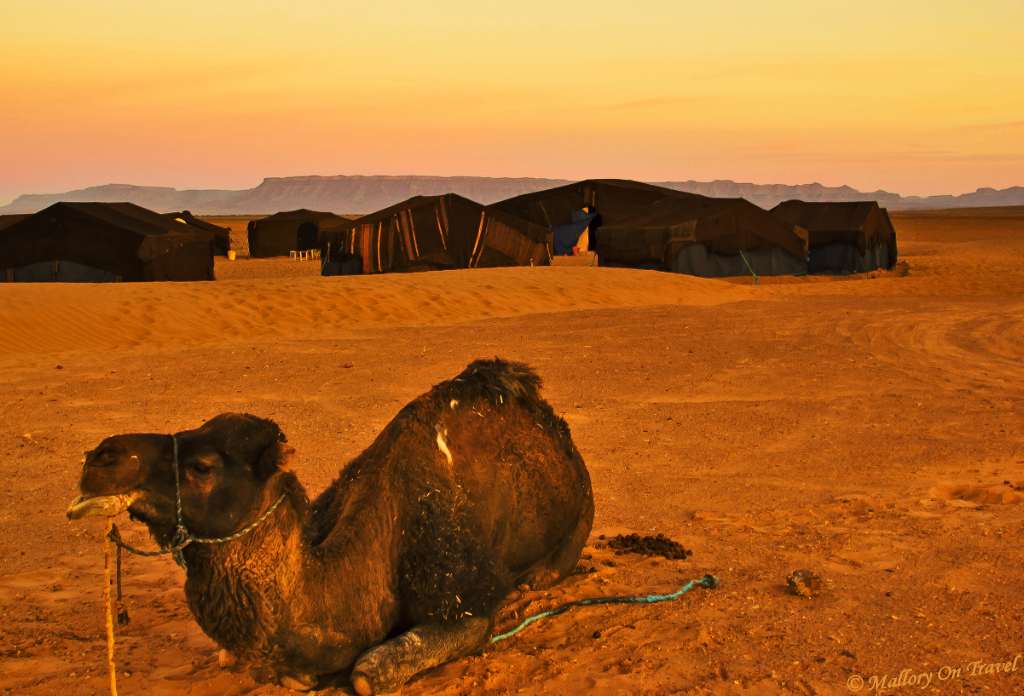 Berber bivouac and their camels at a Moroccan dawn in the Sahara Desert on Mallory on Travel, adventure, adventure travel, photography