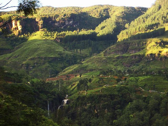 A tea plantation in Sri Lanka, the Knuckles mountains region of Elkaduwa on Mallory on Travel adventure, photography