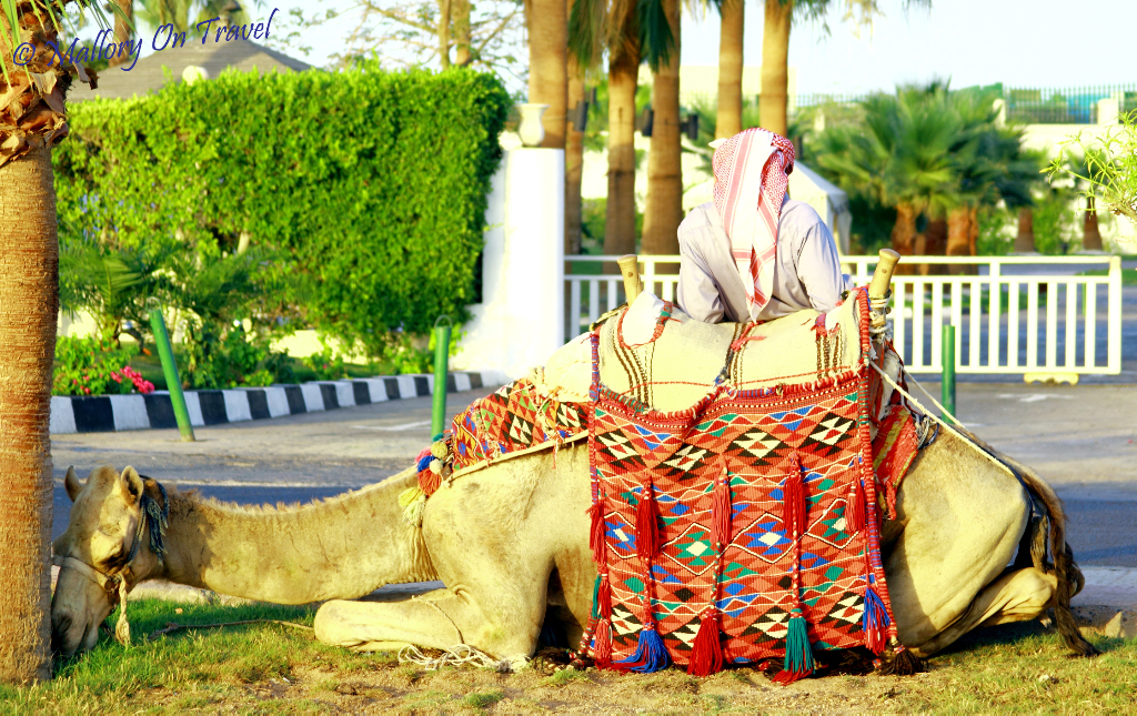 Bedouin and camel in Sharm el Sheik. Egypt on Mallory on Travel adventure, photography