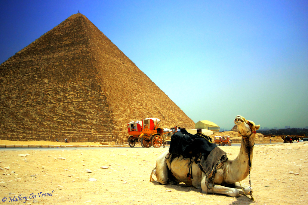 Camel with attitude at the Great Pyramid, Giza, Egypt  on Mallory on Travel adventure, photography