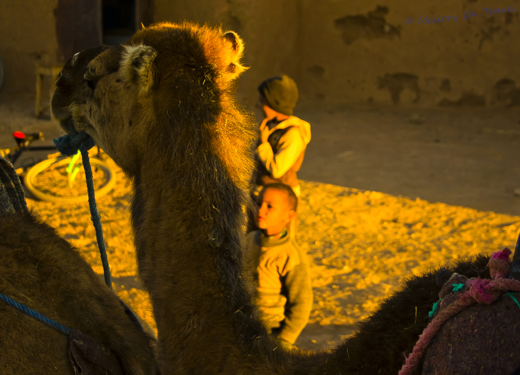 Kids following camels & riding tourists in the Moroccan deserrt  on Mallory on Travel adventure, photography