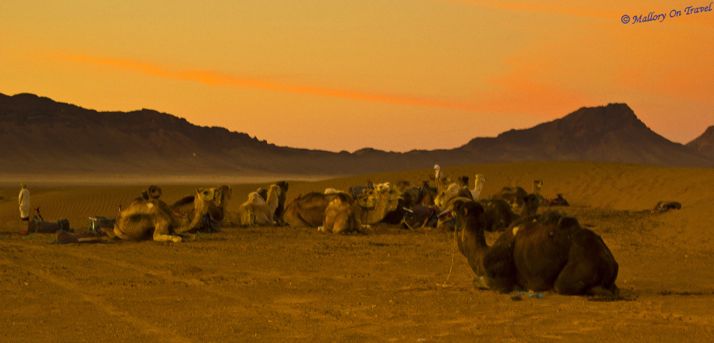Camels at a Berber bivouac in the Moroccan Sahara on Mallory on Travel adventure, photography