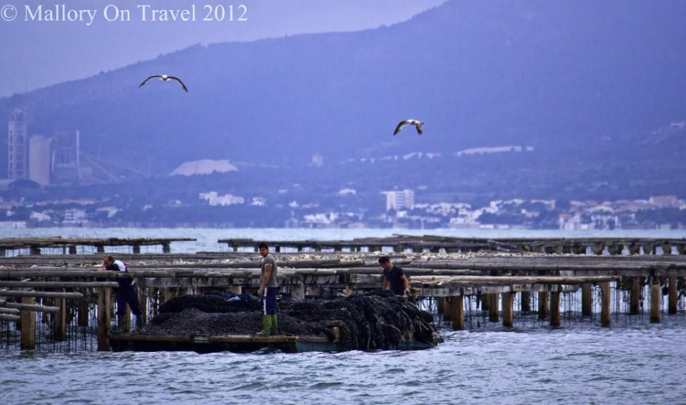 Mollusc farming Alfacs Bay in the Delta L'Ebre in Catalonia, Spain on Mallory on Travel adventure photography
