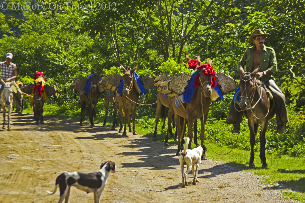 Horseman on the road in Cuba in the Carribean on Mallory on Travel adventure photography