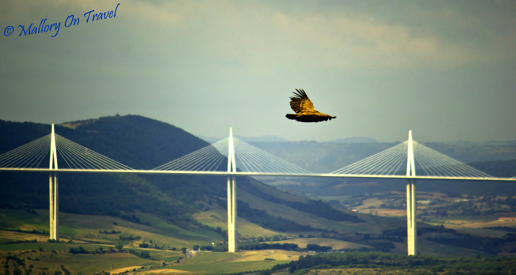A Tarn Gorge raptor soars over the Millau Viaduct in the French Aveyron on Mallory on Travel adventure photography