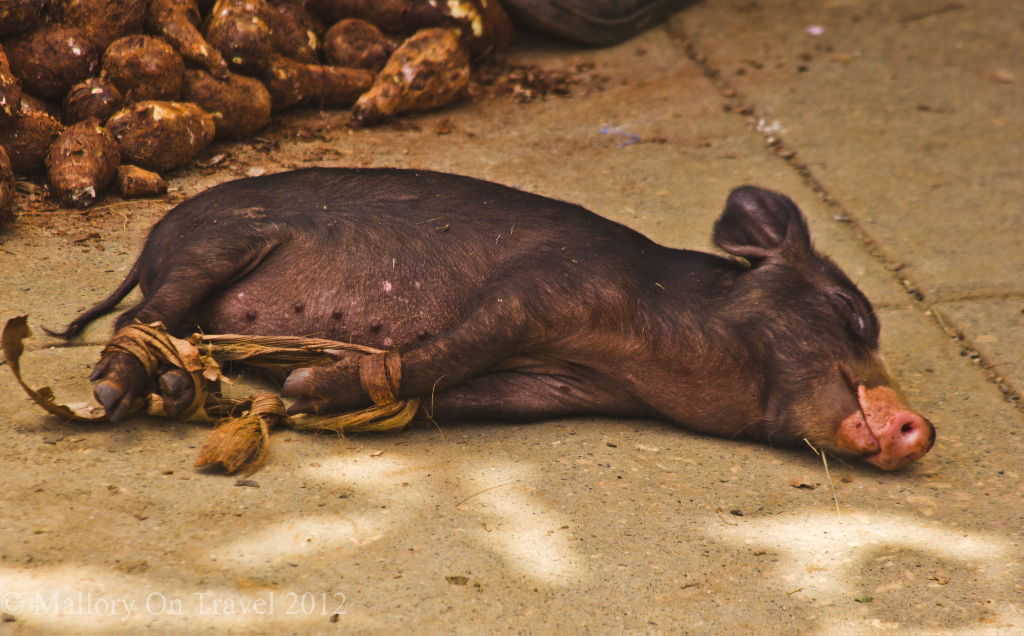 Pig for sale at a market stall in Baracoa on the Caribbean island of Cuba on Mallory on Travel adventure photography