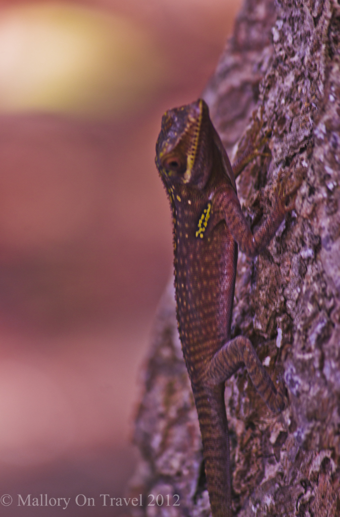 A small reptile in woodland near Baracoa, Cuba in the Caribbean on Mallory on Travel adventure photography