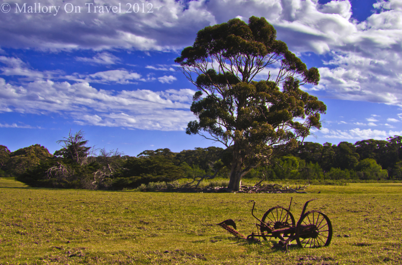 Gumtree on Kangaroo Island off South Australia in the Southern Ocean on Mallory on Travel adventure photography