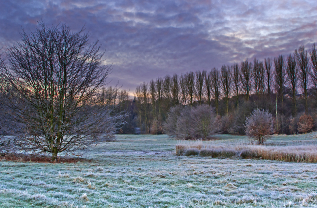 Greenbelt woodland in Salford, Manchester in the United Kingdom on Mallory on Travel adventure photography Iain Mallory-300-38_salford_winter