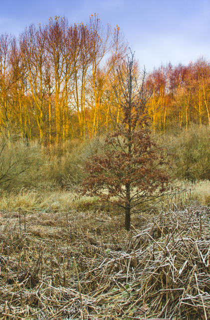 Greenbelt woodland in Salford, Manchester in the United Kingdom on Mallory on Travel adventure photography Iain Mallory-300-56_winter_scene