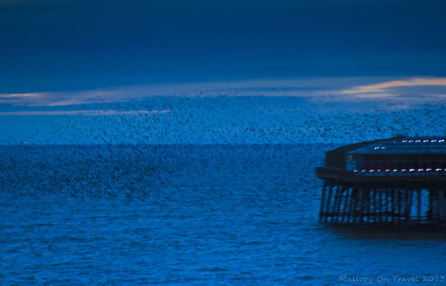 Flocking birds over North Pier on the Fylde Coast near Blackpool on Mallory on Travel, adventure, photography Iain Mallory-300-7_starling_murmur