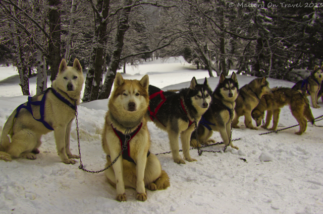 A sled team of huskies in Chamonix in the Rhone-Alpes region of France on Mallory on Travel, adventure, adventure travel, photography Iain Mallory-300-44 sled_team