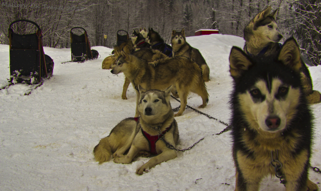 Huskies and Greenland dogs sled team in Chamonix in the Rhone-Alpes region of France on Mallory on Travel, adventure, adventure travel, photography Iain Mallory-300-49 husky_team