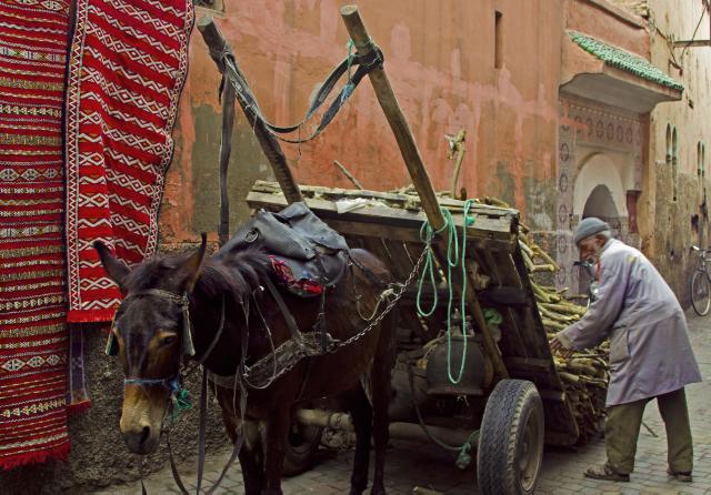 A hard working donkey and his owner in the medina of Marrakech in the North African country of Morocco on Mallory on Travel, adventure, adventure travel, photography Iain_Mallory_00059 donkey_marrakech