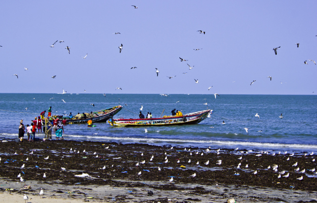 Seagulls and pirogues beyond the breakers at Tanji market in The Gambia, Africa on Mallory on Travel, adventure, adventure travel, photography Iain Mallory-300-20