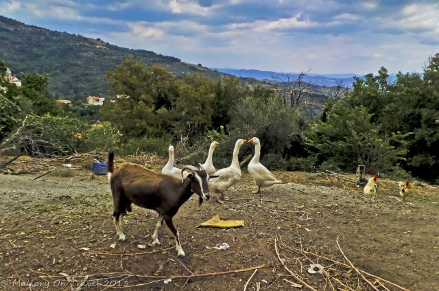 Roadside farm at Trypi near Mystras on the Peloponnese Peninisula, Greece Iain Mallory-300-70