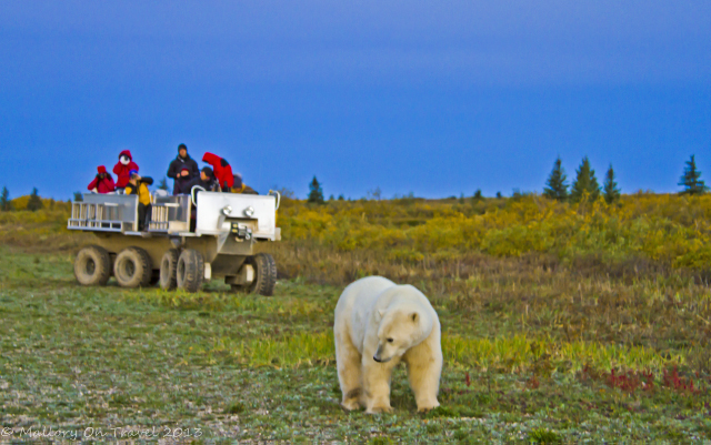 Polar bear encounter at Nanuk Polar Bear Lodge, Manitoba in Canada on Mallory on Travel adventure, adventure travel, photography Iain Mallory-300-147_polar_bear