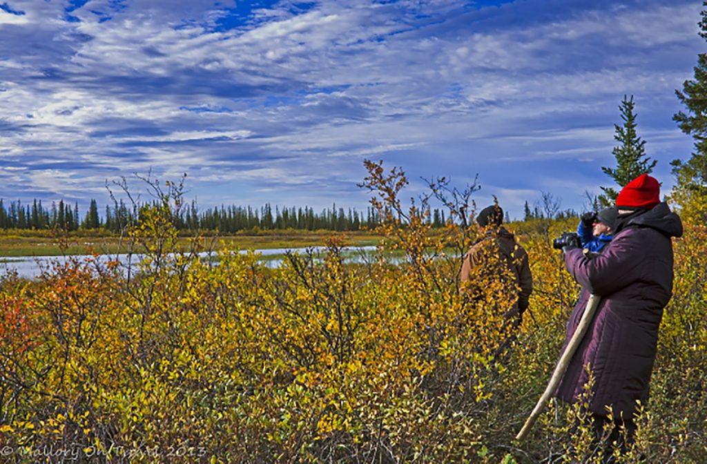 Hunting with camera in at Nanuk Polar Bear Lodge, Manitoba in Canada on Mallory on Travel adventure, adventure Iain Mallory-300-155_camera_safaritravel, photography iain-mallory-300-155