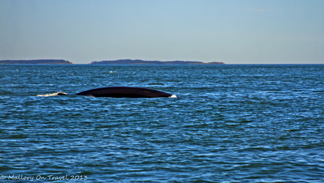 Fin whale on a whale watching expedition in St Andrews, the Bay of Fundy, New Brunswick in Canada on Mallory on Travel adventure, adventure travel, photography Iain Mallory-300-9_fin_whale