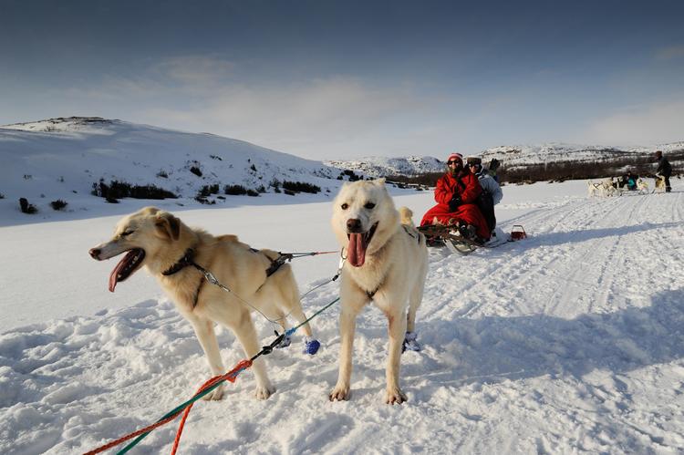 Husky sledding at Kirkenes in Hurtigruten in Arctic Norway on Mallory on Travel adventure, adventure travel, photography