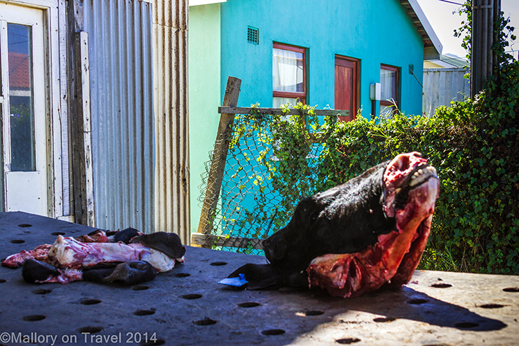 The butchers shop in the township of Masiphumelele  near Cape Town, South Africa on Mallory on Travel adventure, adventure travel, photography Iain Mallory-300-17 masiphumelele_township