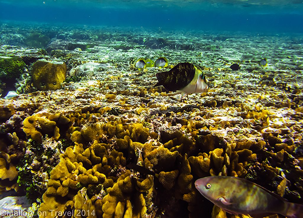Coral lagoon at Lady Elliot Island in the Great Barrier Reef, Queensland, Australia on Mallory on Travel adventure, adventure travel, photography Iain Mallory-300-23 great_barrier_reef