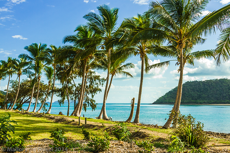 Palm trees on Keswick Island in the Whitsundays, near Mackay. Queensland in Australia on Mallory on Travel adventure, adventure travel, photography Iain Mallory-300-229 palm_trees