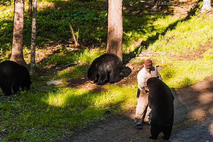 Bear whisperer in New Brunswick, bear on Mallory on Travel adventure, adventure travel, photography Iain Mallory-300-13 bear_whisperer