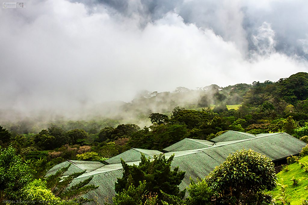 The first sign of a storm in the cloudforests of Monteverde in Costa Rica on Mallory on Travel adventure, adventure travel, photography Iain Mallory_9031 cloudforest