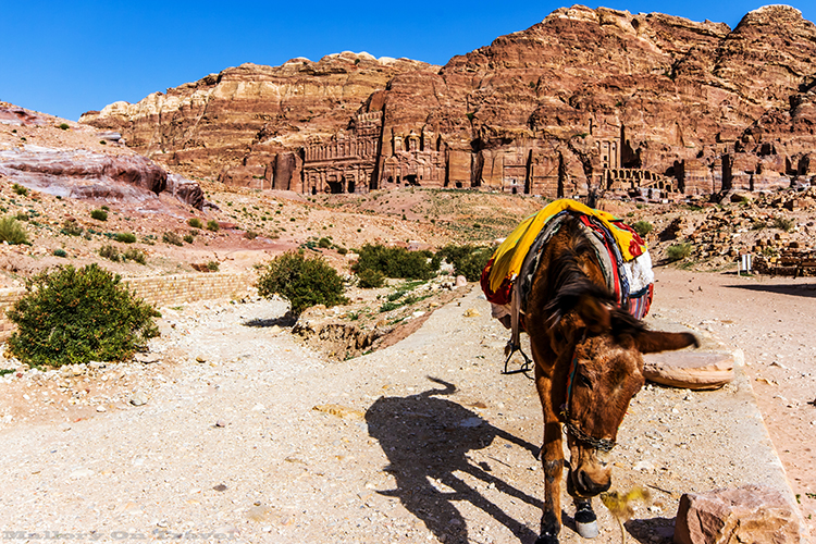 Donkey in front of the Nabataean rock the temples in Petra, Jordan on Mallory on Travel adventure, adventure travel, photography on Mallory on Travel adventure, adventure travel, photography Iain_Mallory_Jordan1408870
