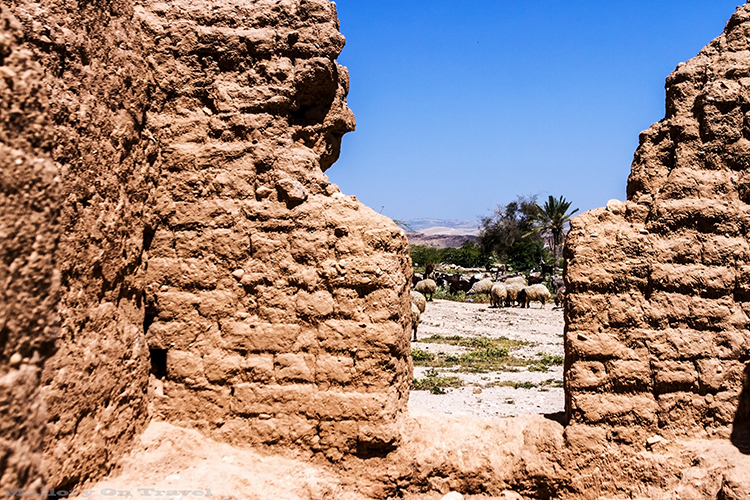 Grazing sheep around the old ruins of a building in the desert of Jordan on Mallory on Travel adventure, adventure travel, photography Iain_Mallory_Jordan1409128