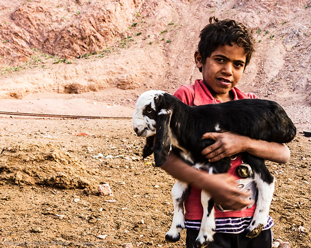 Bedouin boy and sheep in a nomadic Bedouin encampment in the Syrian desert of Jordan on Mallory on Travel adventure travel, photography, travel Iain_Mallory_Jordan1408640