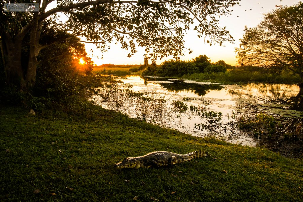 Sunset in the Pantanal at the roosting tree at Araras ecolodge in the Mato Grosso region of Brazil on Mallory on Travel adventure travel, photography, travel Iain_Mallory_Patanal-3821