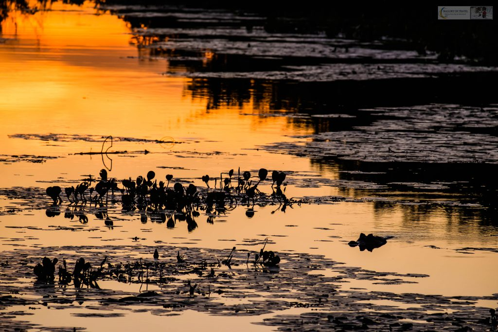 Sunset in the Pantanal at the roosting tree at Araras ecolodge in the Mato Grosso region of Brazil on Mallory on Travel adventure travel, photography, travel Iain_Mallory_Patanal-3847