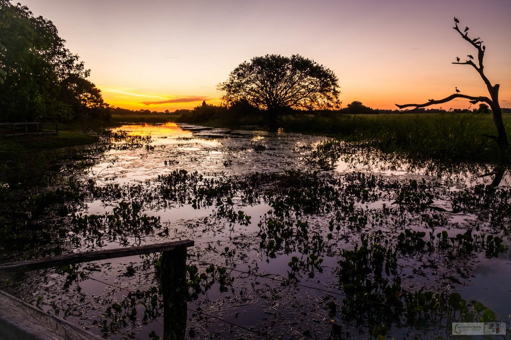 Sunset in the Pantanal at the roosting tree at Araras ecolodge in the Mato Grosso region of Brazil on Mallory on Travel adventure travel, photography, travel Iain_Mallory_Patanal-3864