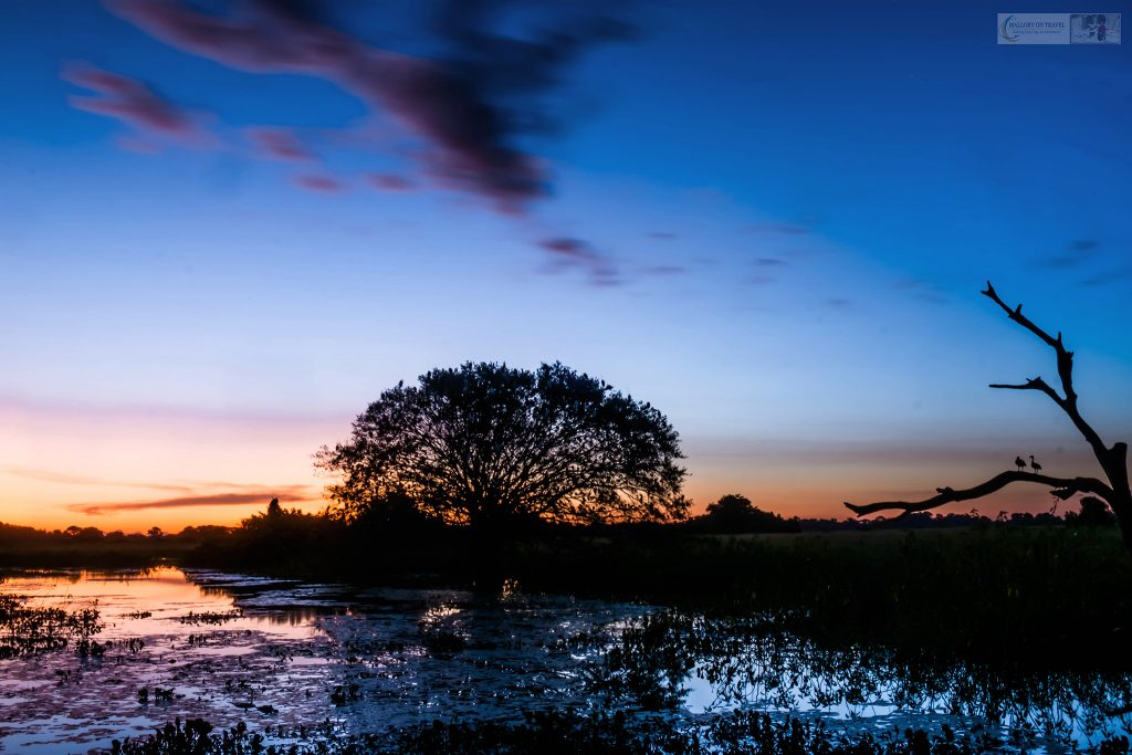 Sunset in the Pantanal at the roosting tree at Araras ecolodge in the Mato Grosso region of Brazil on Mallory on Travel adventure travel, photography, travel Iain_Mallory_Patanal-3894