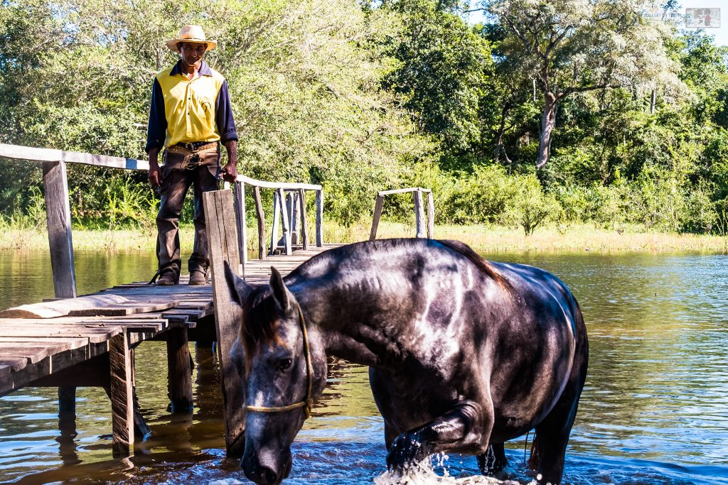A cowboy horse swimming in the wetlands of the Pantanal on the Araras ecolodge in the Mato Grosso region of Brazil on Mallory on Travel adventure travel, photography, travel Iain_Mallory_Patanal-4232