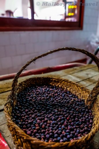 Juniper berries at Xoriguer gin distiller in Mahón on the Balearic Island of Menorca, Spain on Mallory on Travel adventure travel, photography, travel Iain_Mallory_Menorca-3150