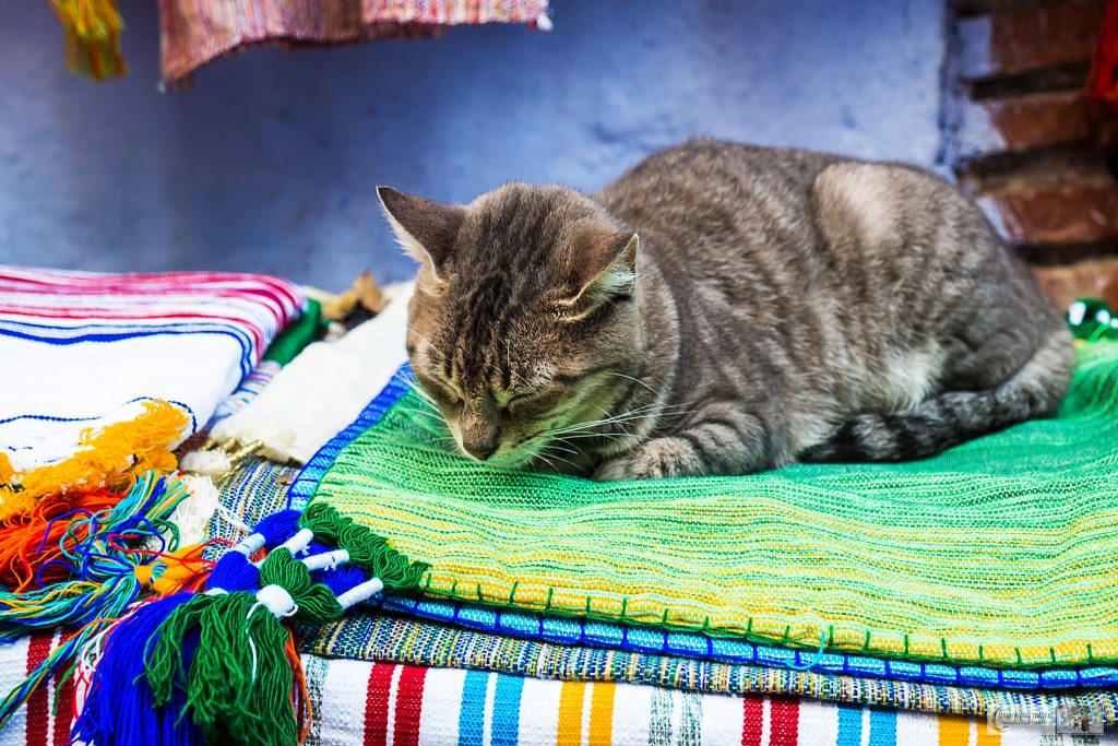 One of Chefchaouens cats makes a bed in the souk of the Blue City of Morocco, North Africa on Mallory on Travel adventure travel, photography, travel Iain Mallory_Morocco 045