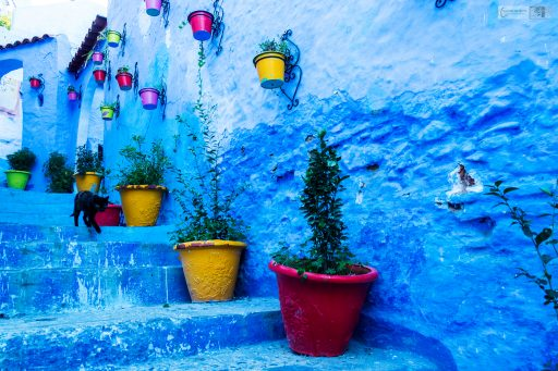 A Chefchaouen cat in possibly the most famous street in the Blue City, a Moroccan black cat in North Africa on Mallory on Travel adventure travel, photography, travel Iain Mallory_Morocco 050