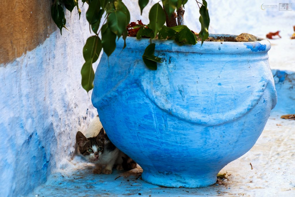 One of Chefchaouens cats plays hide and seek, using a plant pot to hide in the back streets of the Blue City of Morocco, North Africa on Mallory on Travel adventure travel, photography, travel Iain Mallory_Morocco 054