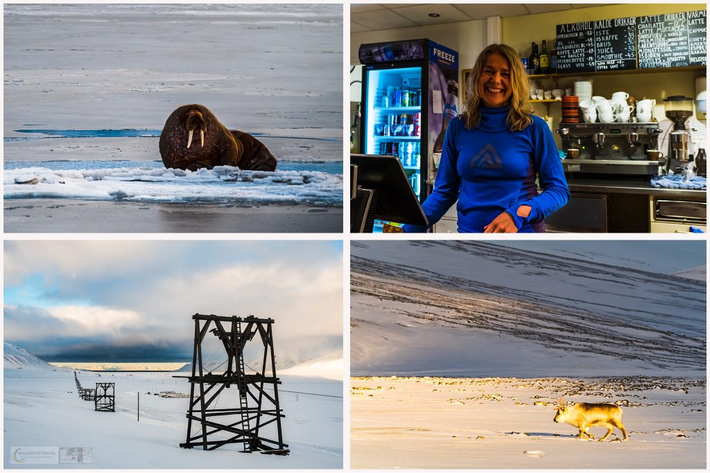 A montage of Svalbard life, walrus and reindeer, the most northerly chocolatier in the world and the ropeway servicing coal mine number 7, near Longyearbyen on Spitzbergen in the Norwegian archipelago inside the Arctic Circle on Mallory on Travel adventure travel, photography, travel Iain Mallory_Svalbard Montage-1