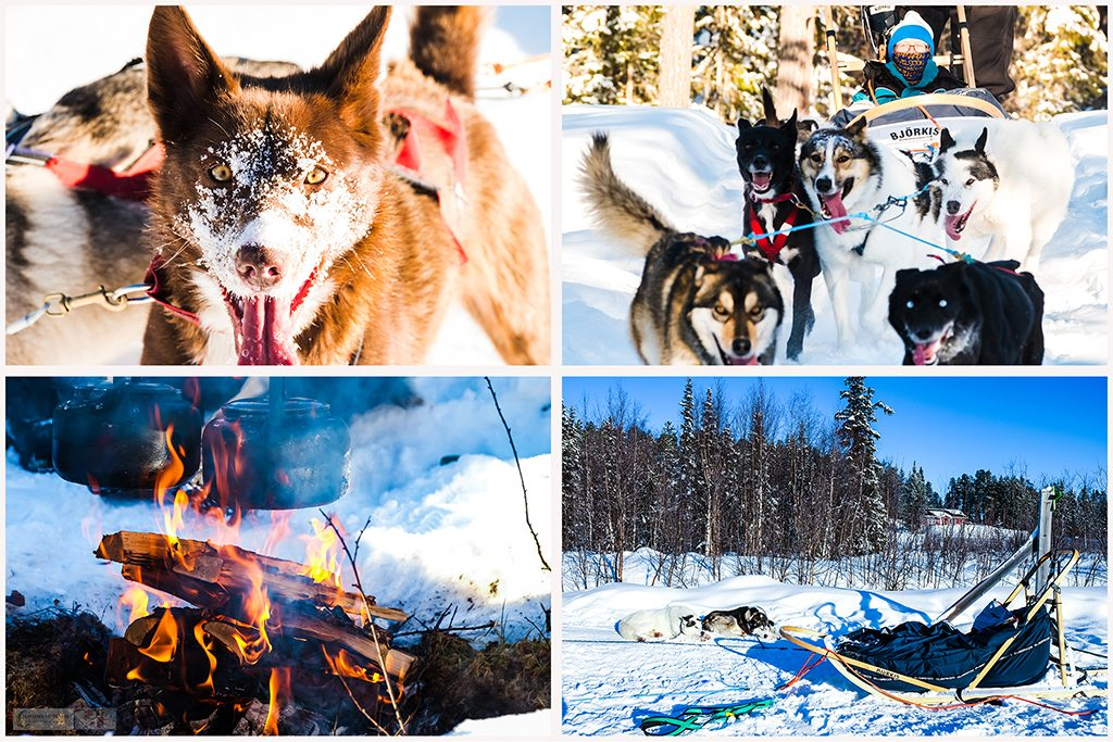 Sled dogs montage from a dog sledding trip in Lappeasuando in the Arctic Circle, Swedish Lapland on Mallory on Travel adventure travel, photography, travel Iain Mallory Lapland_Montage